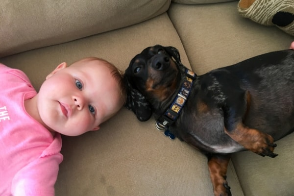 dog and baby on a couch