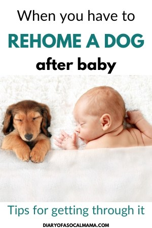 giving up dog after baby