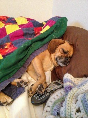 dog sleeping on a bed with pillow, blanket, & remote