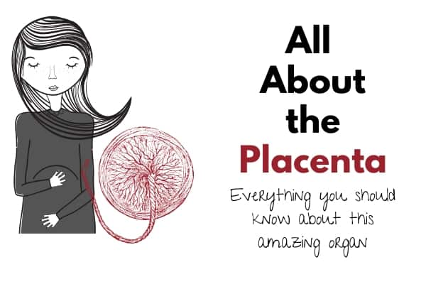 all about the placenta