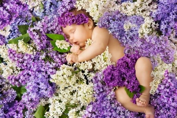 baby girl sleeping in purple flowers